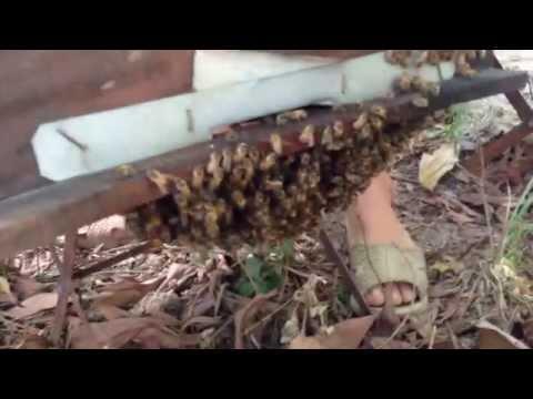 So sánh thùng nuôi ong mật