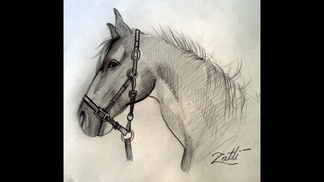 Horse Drawing Head