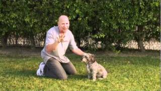 Training Your Dog To Sit Up - Clip #7