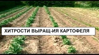 Хитрости выращивания картофеля