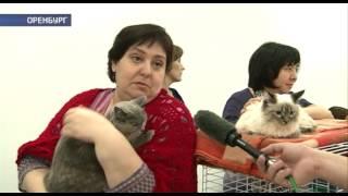 В Оренбурге прошла выставка-раздача домашних животных
