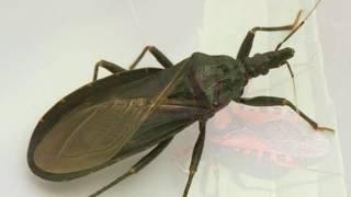 Top 5 Deadliest And Dangerous Insect||5 कीड़े आपको मार सकते हैं||Hindi