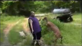 Deer Beats Up Fat Guy