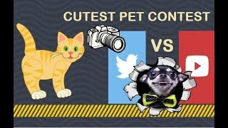 Bengal Cats React To : Cutest Animal Pet Photo Contest Challenge 😼 YouTube vs Twitter 2019 - Ep.19