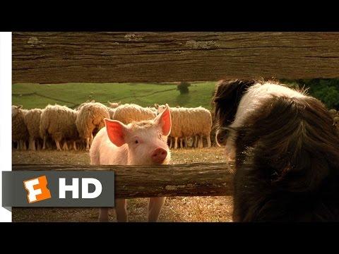 Babe, the New Sheepdog - Babe (4/9) Movie CLIP (1995) HD streaming vf
