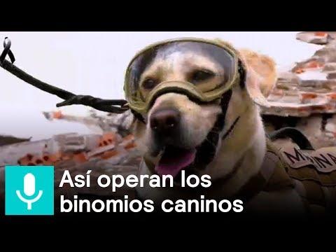 'Frida' y 'Titán', perros rescatistas y héroes, en Al Aire - Al Aire con Paola