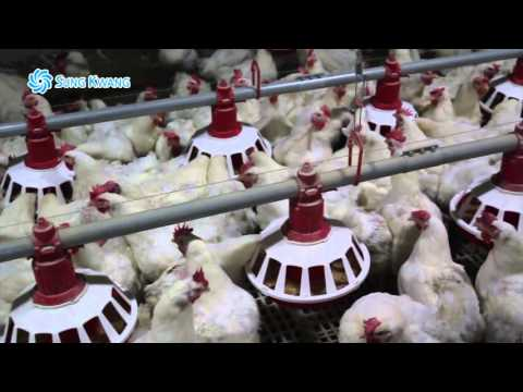 CTP Poultry Equipment from Korea by SK Co. Ltd.