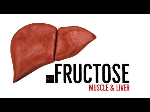 EX-e: High Fructose On Liver And Muscle Fat & Glycogen