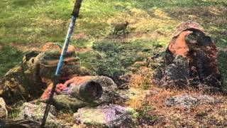 Охота на снежного барана. Камчатка