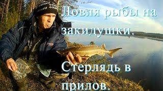 Ловля рыбы на закидушки. Стерлядь в прилов - Болен Рыбалкой №338