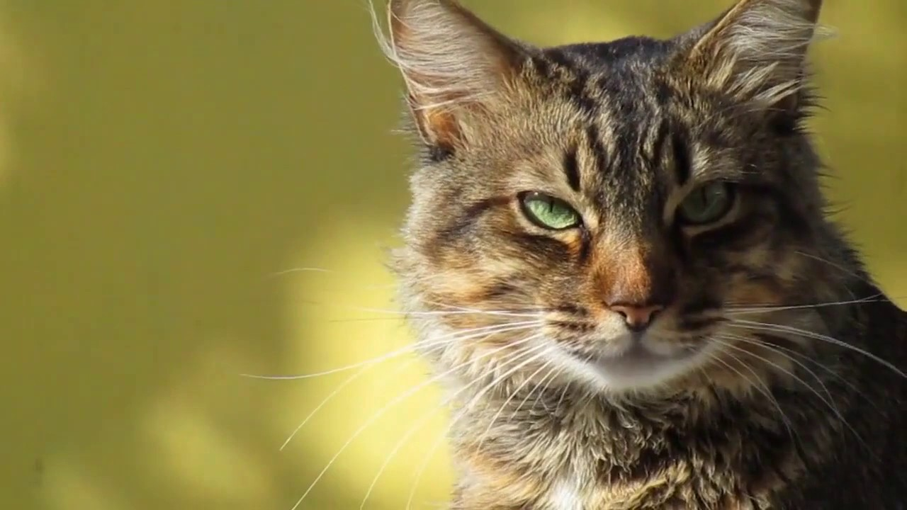 #Cute Pets  Animals,cat video funny song, tom cat funny video songs telugu, Funny Animals