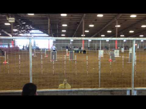 Austin K-9 Xpress AKC agility trial, 11/9/14