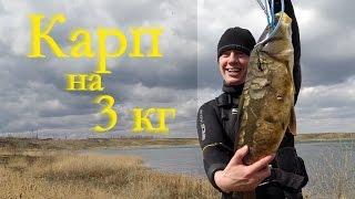 Подводная охота на карпа весной. Карп на 3 кг.(Подводная охота в Челябинской области, до нерестового запрета на карпа. Только-только начали оттаивать..., 2015-04-23T14:59:50.000Z)