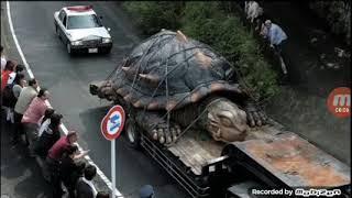 اكبر 10 حيوان في العالم