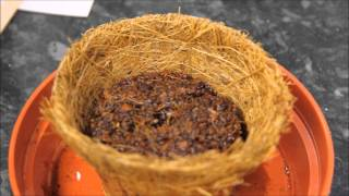 Planting a Venus Fly Trap