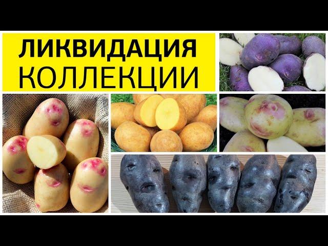 Полная ликвидация коллекции семенного картофеля: с 7 апреля 2020 г. Скидка 25 % на все сорта!