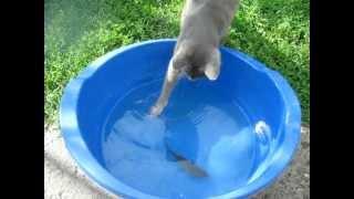 Кот рыбак. Прикол. Смотреть всем. +100500