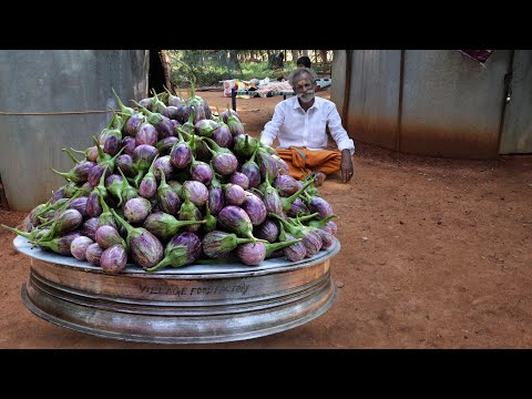 VEG!!! BRINJAL Recipe Prepared by my Daddy Arumugam / Village Food Factory
