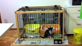 2011年さくら保育園。今回は保育園と言うより飼い猫修業ですね。さすが...