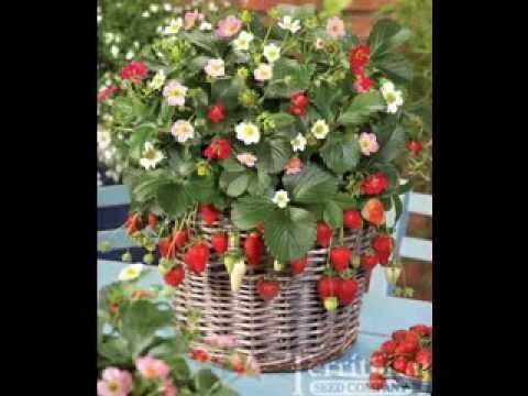 Strawberry Garden Ideas best 25 strawberry planters ideas on pinterest strawberry tower traditional garden hoses and strawberry plants Vertical Strawberry Garden Ideas