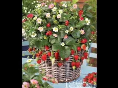 Vertical Strawberry Garden Ideas YouTube