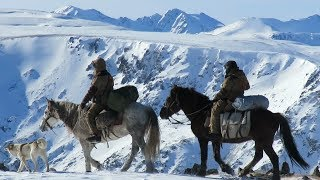 Зона покоя Укок. Снежный барс в горах Южного Алтая. Altai. Snow leopard.