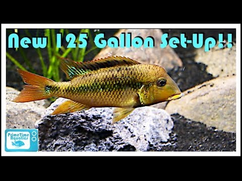 New South American Fish Tank Set Up! 125 Gallon Geophagus Pellegrini Get A New Home