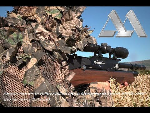 Airgun Hunting: Yellow-Billed Duck Shooting in South Africa with the Air Arms Galahad