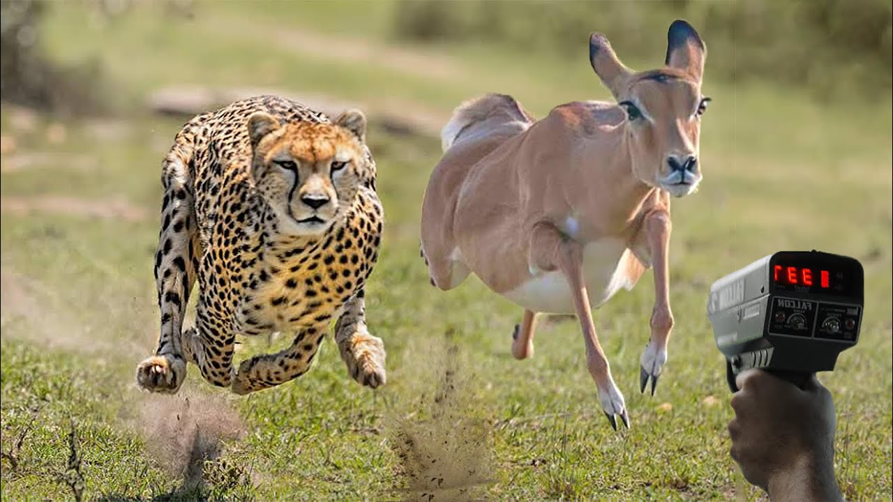 Top 10 Fastest Animals in the World (With Top Speed)