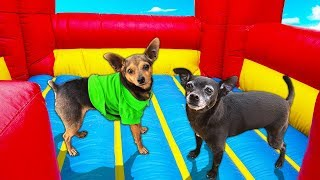 last-dog-to-leave-bounce-house-wins-10-000-pawzam-dogs
