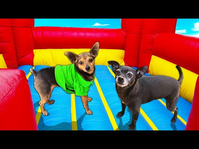Last Dog to Leave Bounce House Wins $10,000 | Pawzam Dogs