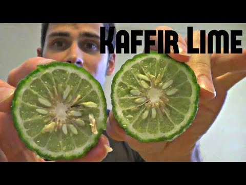 Kaffir Lime Review - Weird Fruit Explorer : Episode 12