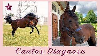 Canto lahmt I Horror Diagnose & geplatzte Träume