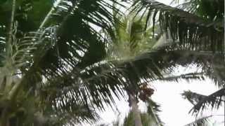 Вьетнам. Март 2012. Отель Ocean Star Resort 4* Смотреть до конца!(Ролик длинный, но там почти вся территория отеля )))))), 2012-10-03T18:16:20.000Z)