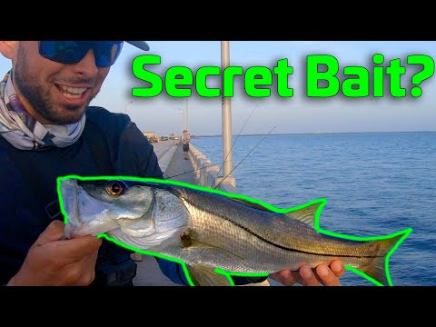 Secret Bait For The Skyway Fishing Pier???