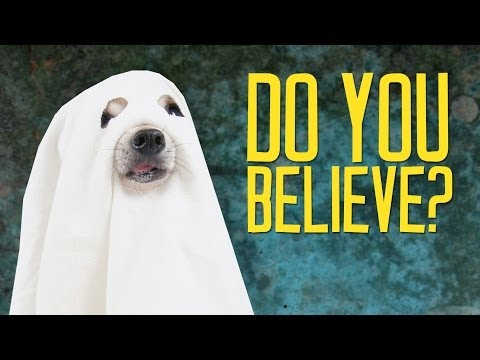 Facts That Prove Ghosts Are Baloney