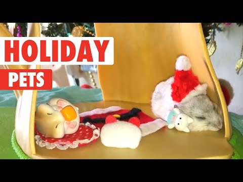 Holiday Pets Compilation | Merry Christmas from The Pet Collective