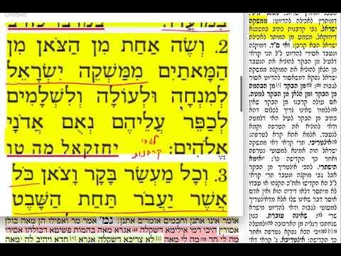 הדף היומי מסכת תמורה דף כט Daf yomi Temurah daf 29