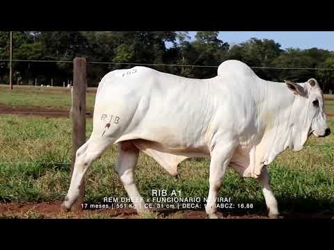 LOTE 153