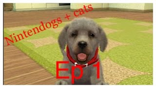Nintendogs + cats : toy poodle version - episode 1