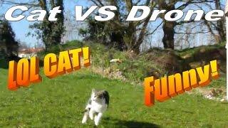 Cat vs Drone , funny !