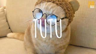TuTu (remix cute) - Alma Zarza // (Vietsub + Lyric) Tik Tok Song