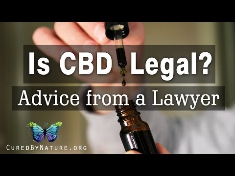 Is CBD Legal? Current Cannabidiol Legal Status - Interview with a Lawyer