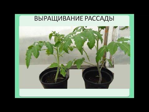 Семинар: Новые методы выращивания рассады.