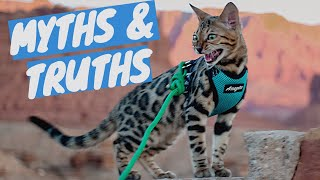 BENGAL CAT myths VS facts - After having a Bengal Kitten for 4 months