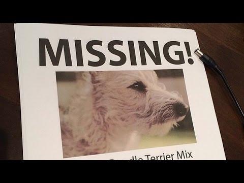 Who Stole Mac Miller's Dog? Mac Miller & Ralphie