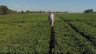 New UGA Peanut Agronomist On The Job