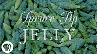Spruce Tip Jelly | Kitchen Vignettes | Pbs Food