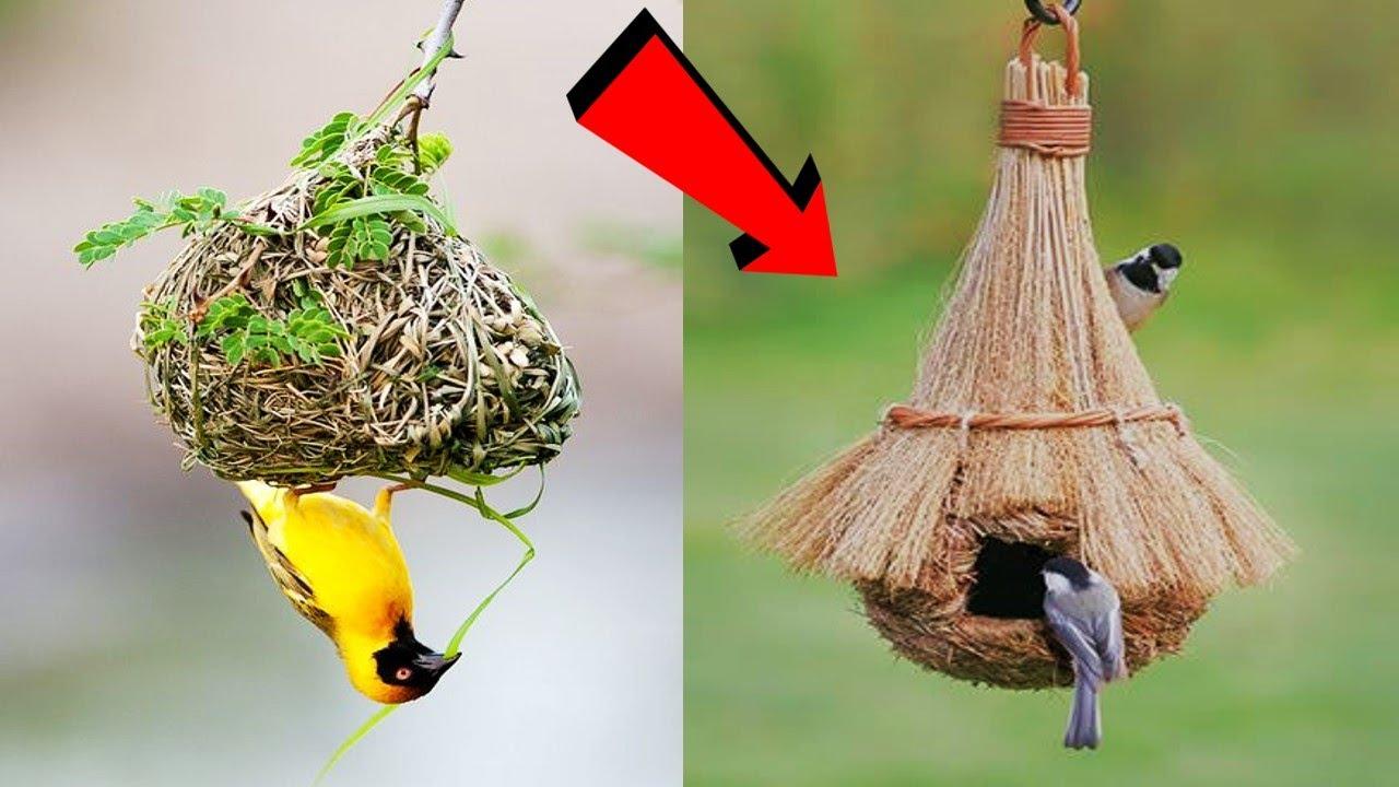 Download 8 ऐसे घोंसले जिन्हें देखने के लिए नसीब लगता है , आप भी जरुर देखे || 8 Amazing nests in the world