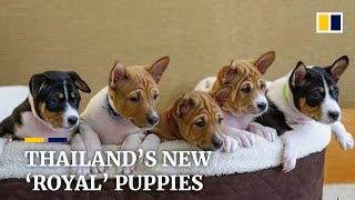 Thailand unveils new royal puppies descended from late king's dog